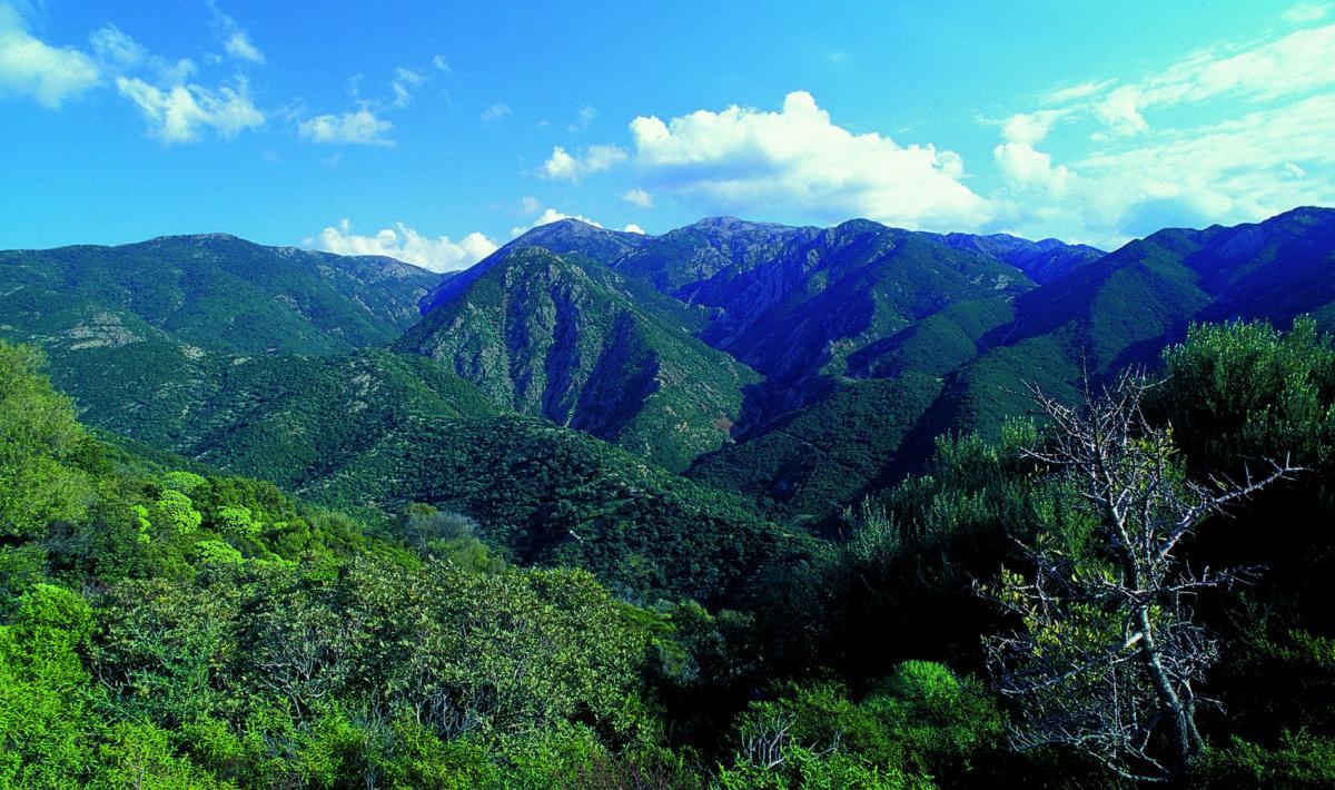 Cover Foresta di Marganai