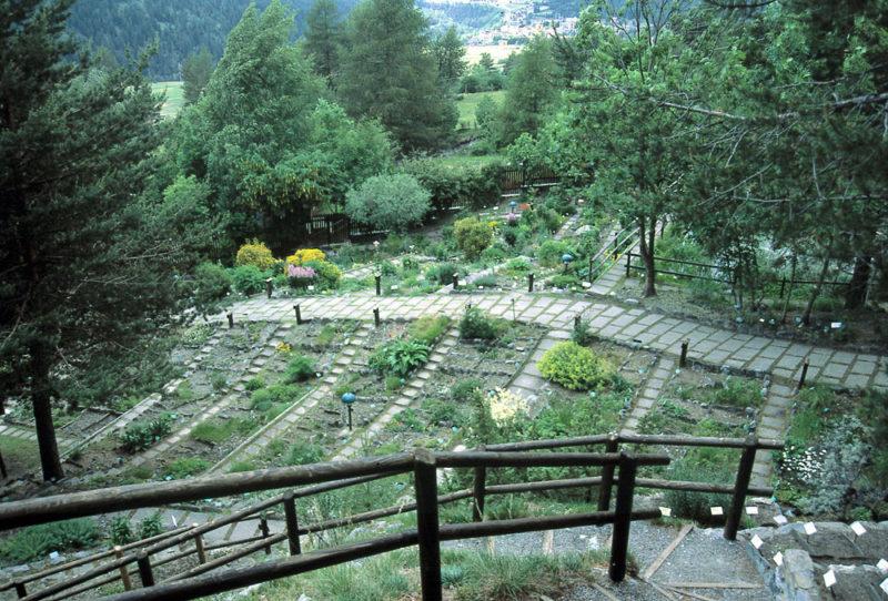 Cover Orto Botanico Alpino Rezia – Collezione di viole e fiori del sottobosco