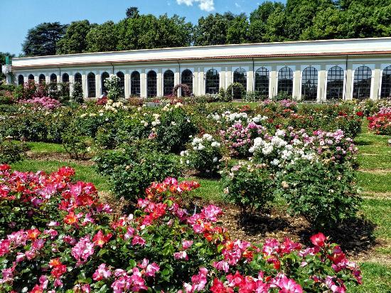 Cover Roseto dei Giardini reali di Monza – Collezione di rose
