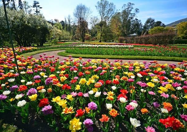 Cover Giardini Botanici di Villa Taranto – Collezione tulipani