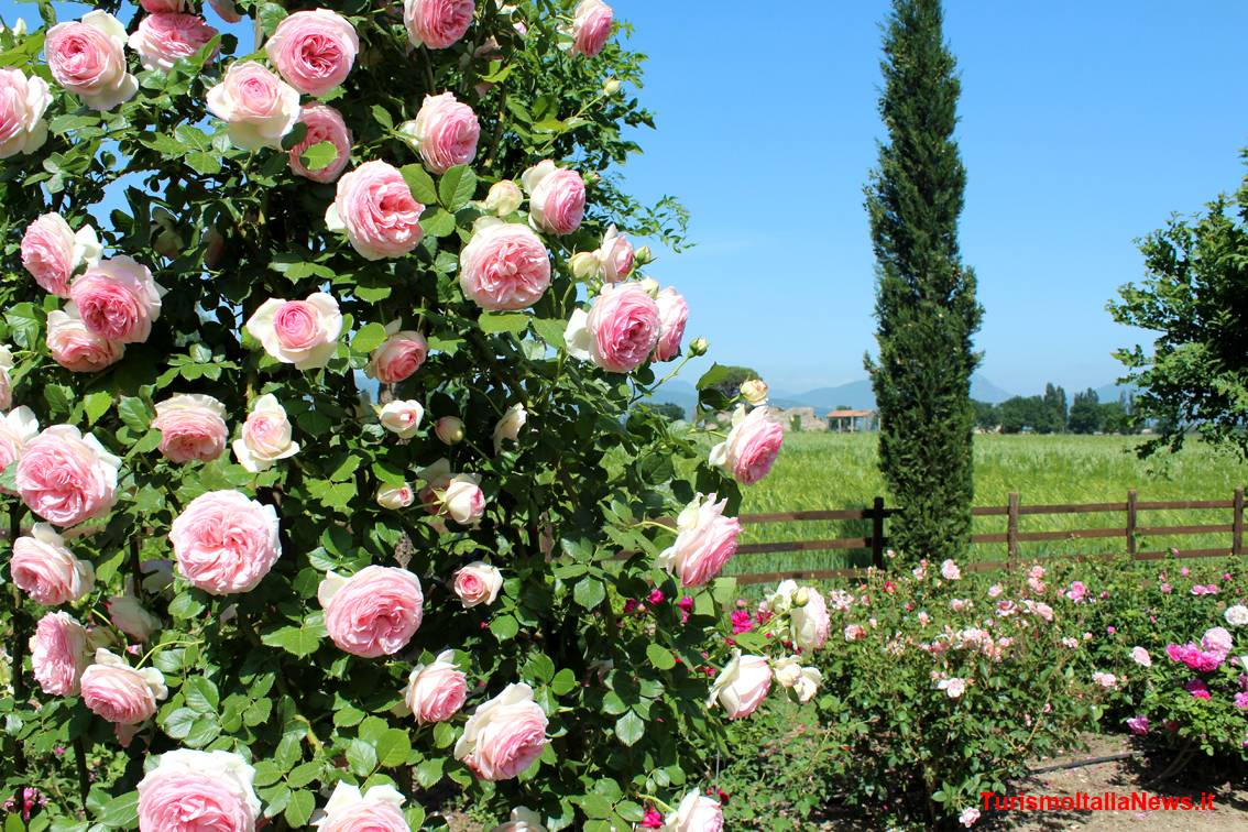 Il giardino delle cento rose luoghi italianbotanicaltrips for Rose da giardino