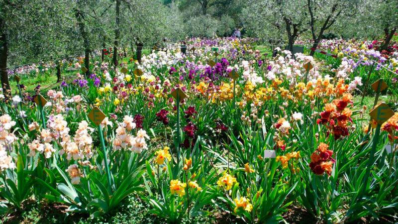 Cover Giardino dell'Iris – Collezione di Iris