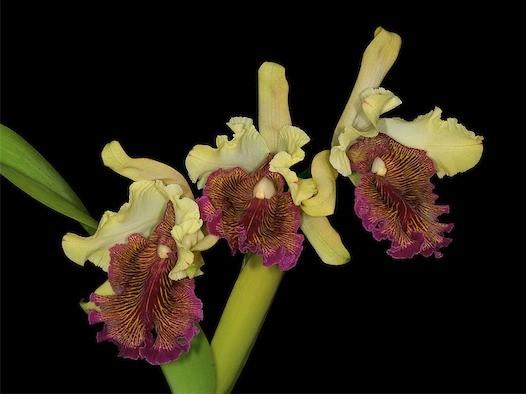 Associazione-Hortus-Orchis-2