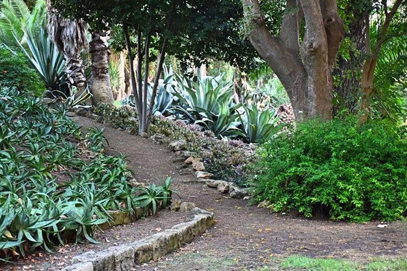 Cover Giardino del Biviere – Collezione cactus e succulente