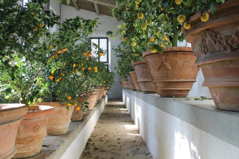Cover Giardino di Boboli – Collezione di agrumi