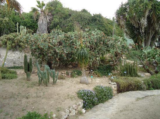 cagliari -cactus