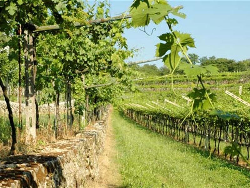 la-giaretta-valpolicella-wines-30638