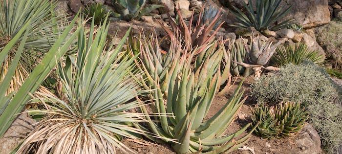 Cover Giardini la Mortella – Collezione di cactus e succulente