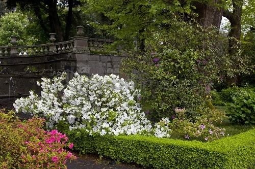 Cover Villa Lante – Collezione di azalee e rododendri