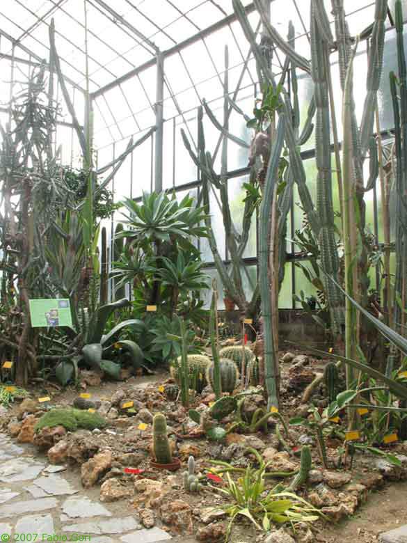 Cover Orto Botanico dell'Università di Siena – Museo Botanico – Collezione di cactacee e succulente