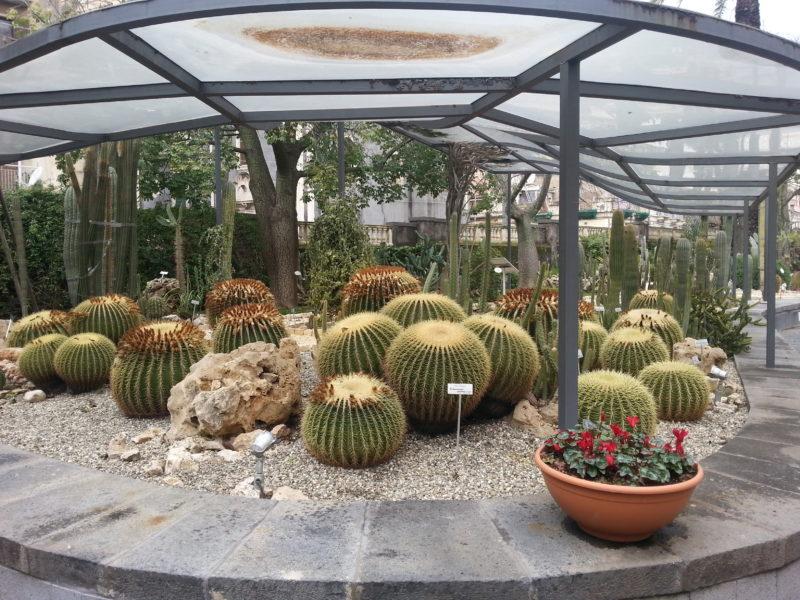 Cover Orto Botanico dell'Università di Catania – Collezione cactus e succulente