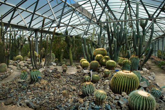 Cover Orto botanico di Napoli – Collezione di cactus e succulente