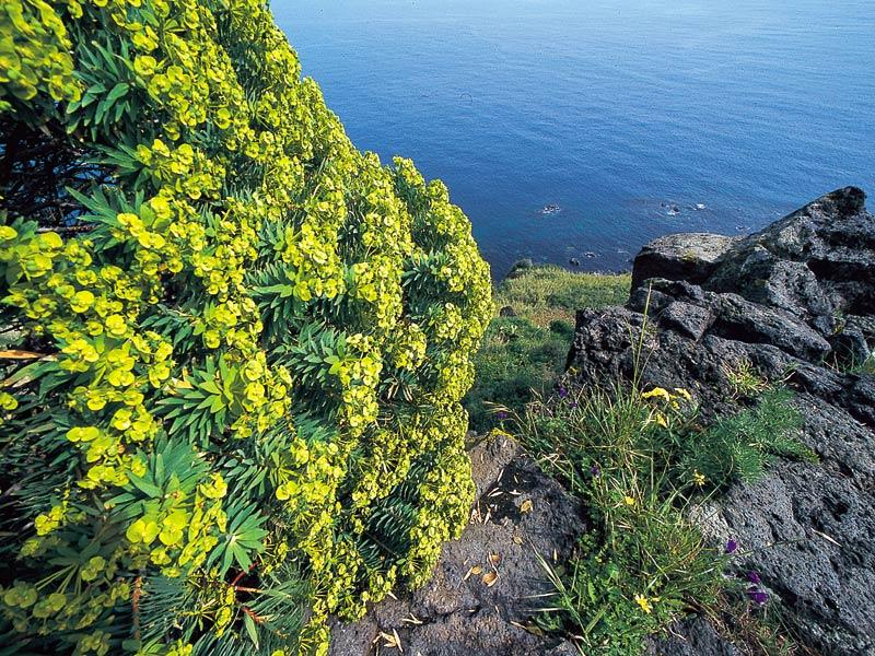 Cover Riserva Naturale della Timpa di Acireale