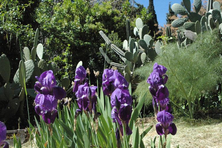 Cover Giardini di Villa Trinità – Collezione di cactus e succulente