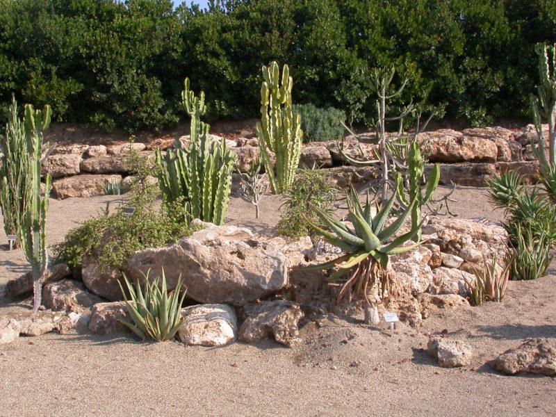 Cover Orto botanico dell'Università della Tuscia – Collezione di cactus e succulente