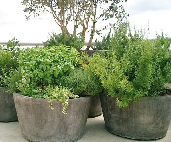 vasi-terracotta_san_rocco
