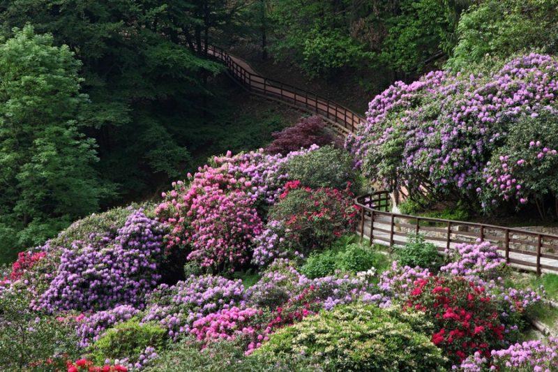 Cover Oasi Zegna / Parco Naturale Oasi Zegna – Collezione di rododendri ed ortensie
