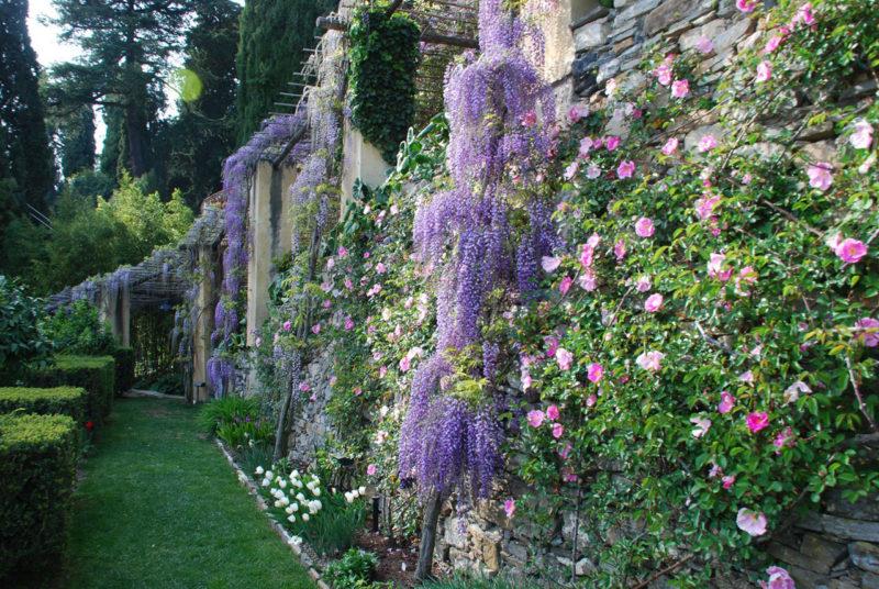 Cover Giardini di Villa Pergola – Collezione di glicini