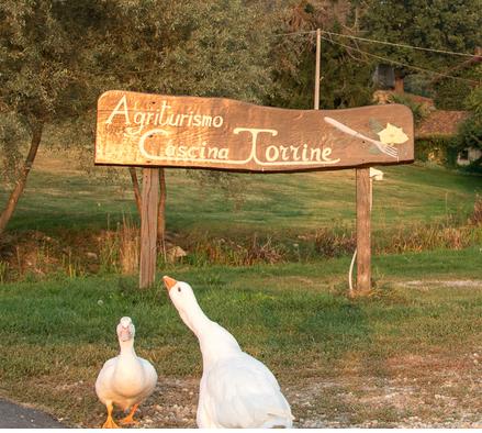 Cover Azienda agricola Cascina Torrine