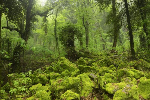Cover Bosco del Sasseto – Monumento Naturale Bosco del Sasseto