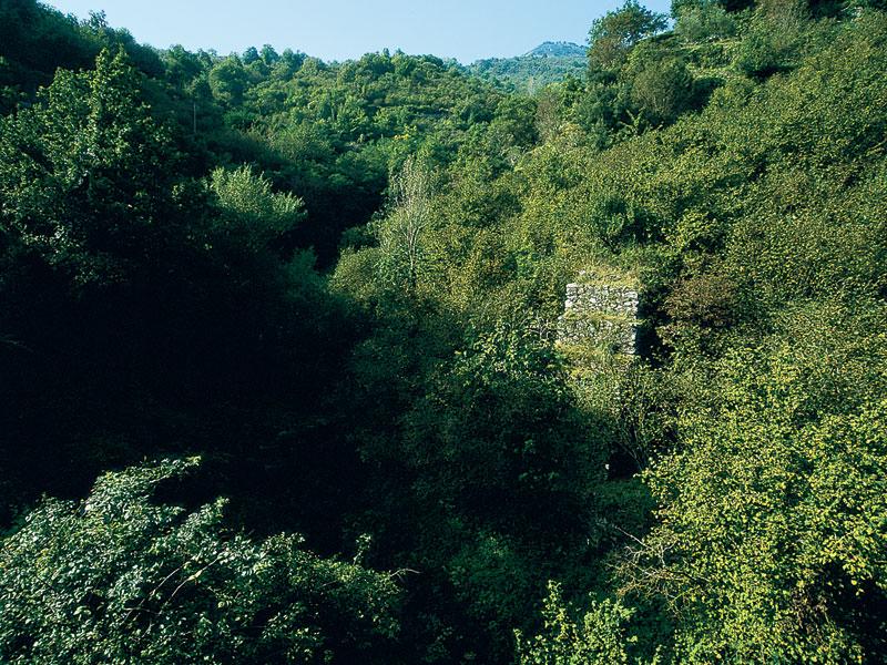 Cover Riserva Naturale Integrale Vallone Calagna sopra Tortorici