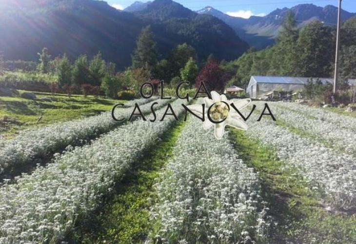 csm_Azienda_Agricola_OlgaCasanova_562e4743a7
