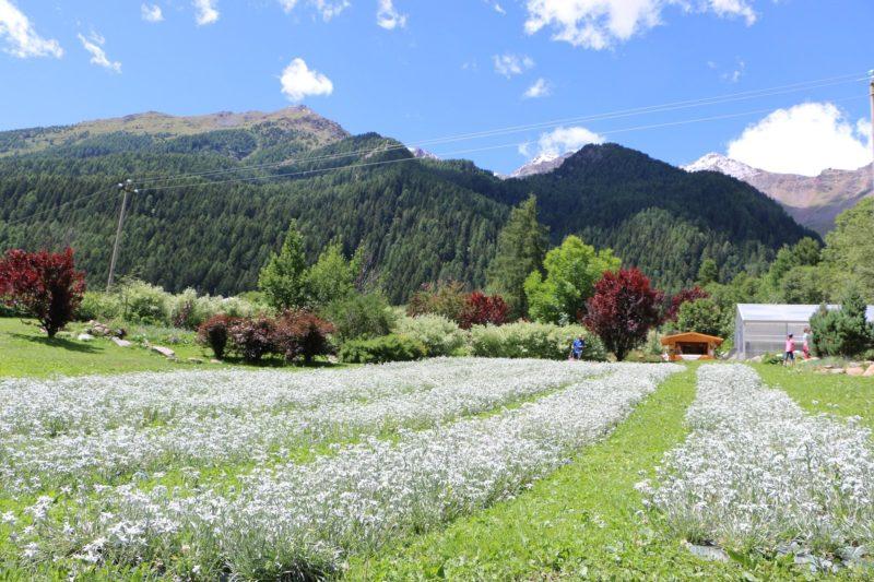 Cover Azienda agricola biocertificata di Olga Casanova e Parco Botanico Alpino