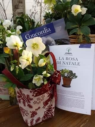 Cover Althea Vivai Cooperativa Agricola