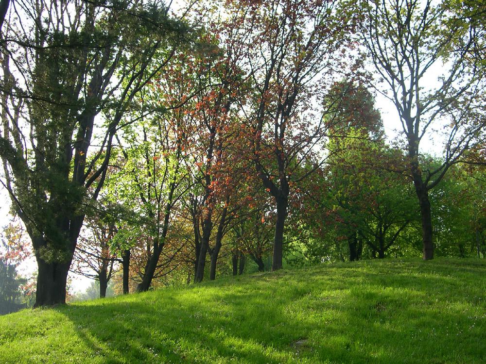 Cover Parco di Monte Stella e il Giardino dei Giusti