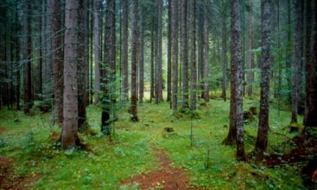 Cover Riserva Naturale Orientata Somadida – Foresta di Somadida