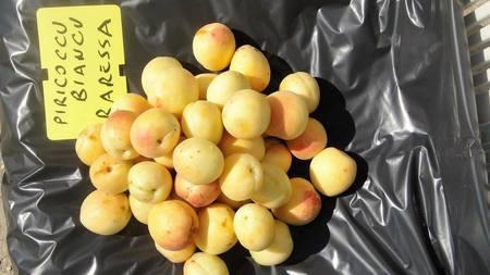 cultivar sarda di albicocco diffusa nelle campagne di Baressa — presso Tra Baressa e Baradili.