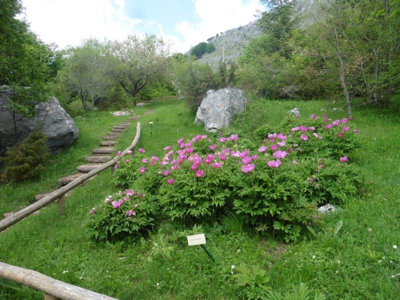 Cover Giardino botanico Maria Ansaldi di Pania di Corfino