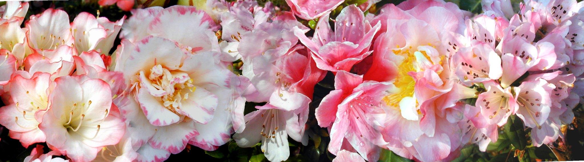 Cover Azienda florovivaistica F.lli Salioli