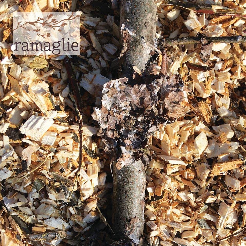Cover Ramaglie – Azienda agricola Knot Garden