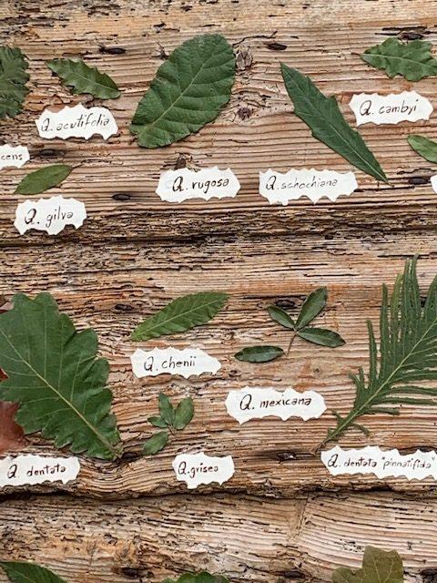 Cover Giardini e Paesaggi – Collezione di Quercus