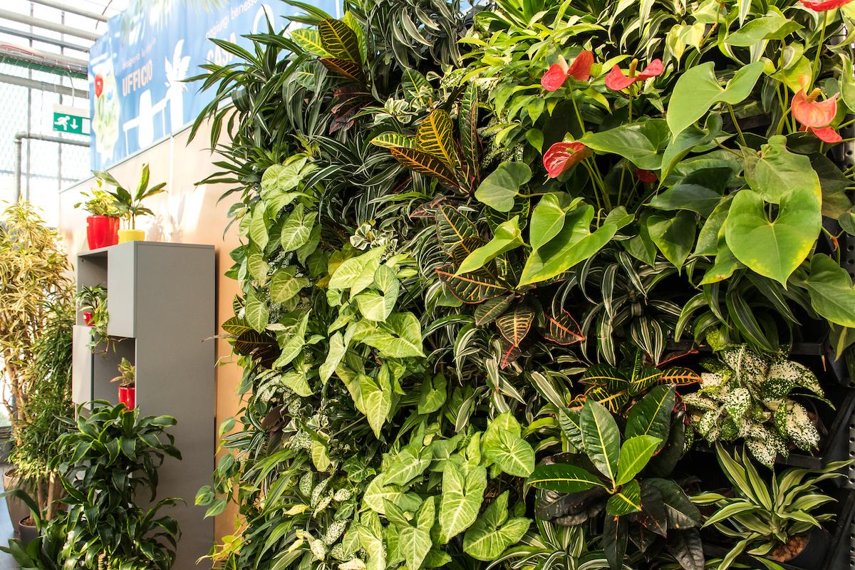 Composizione di piante idroponiche per parete verde viva by Giardango
