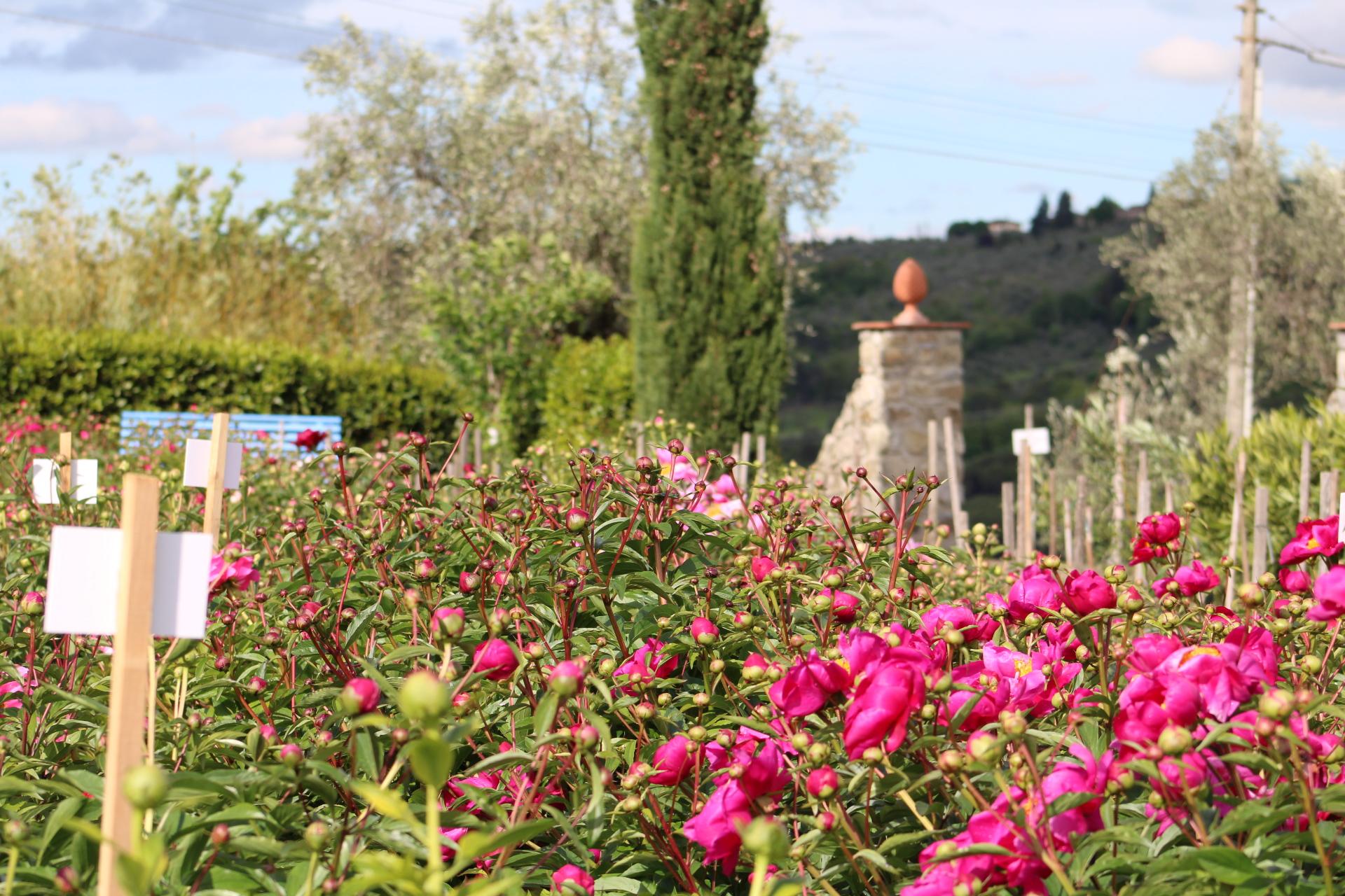 Cover Il Giardino di Castel Ruggero