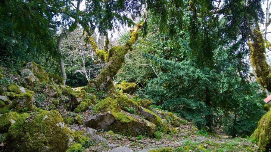 bosco della tassita