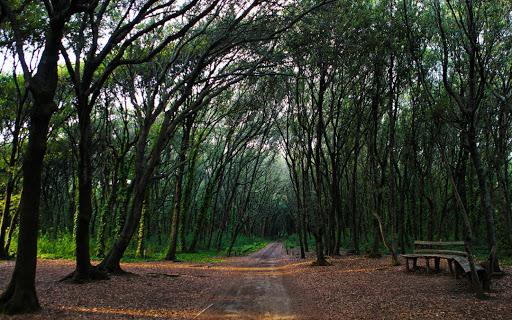 foresta di cuma