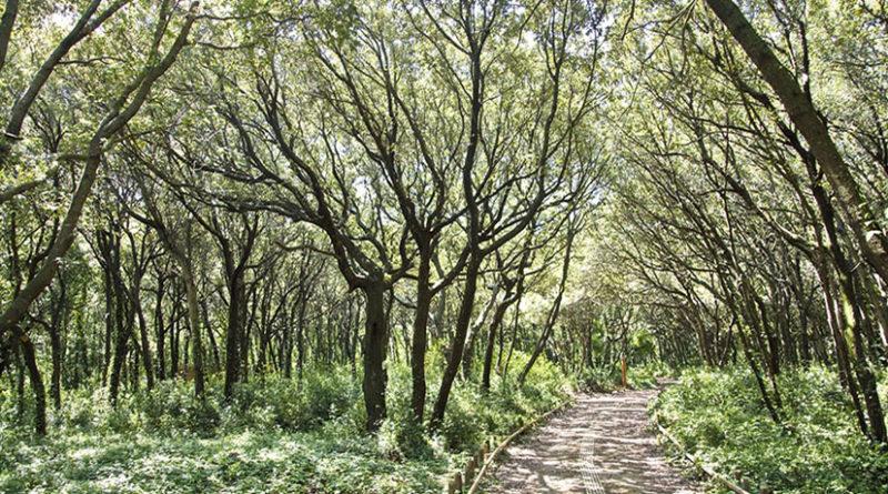 Cover Foresta Mezzana
