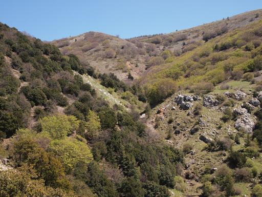 Cover Il lecceto di Monte Quacella nel Parco delle Madonie