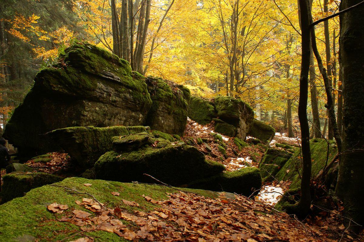 Cover Foresta di Campigna