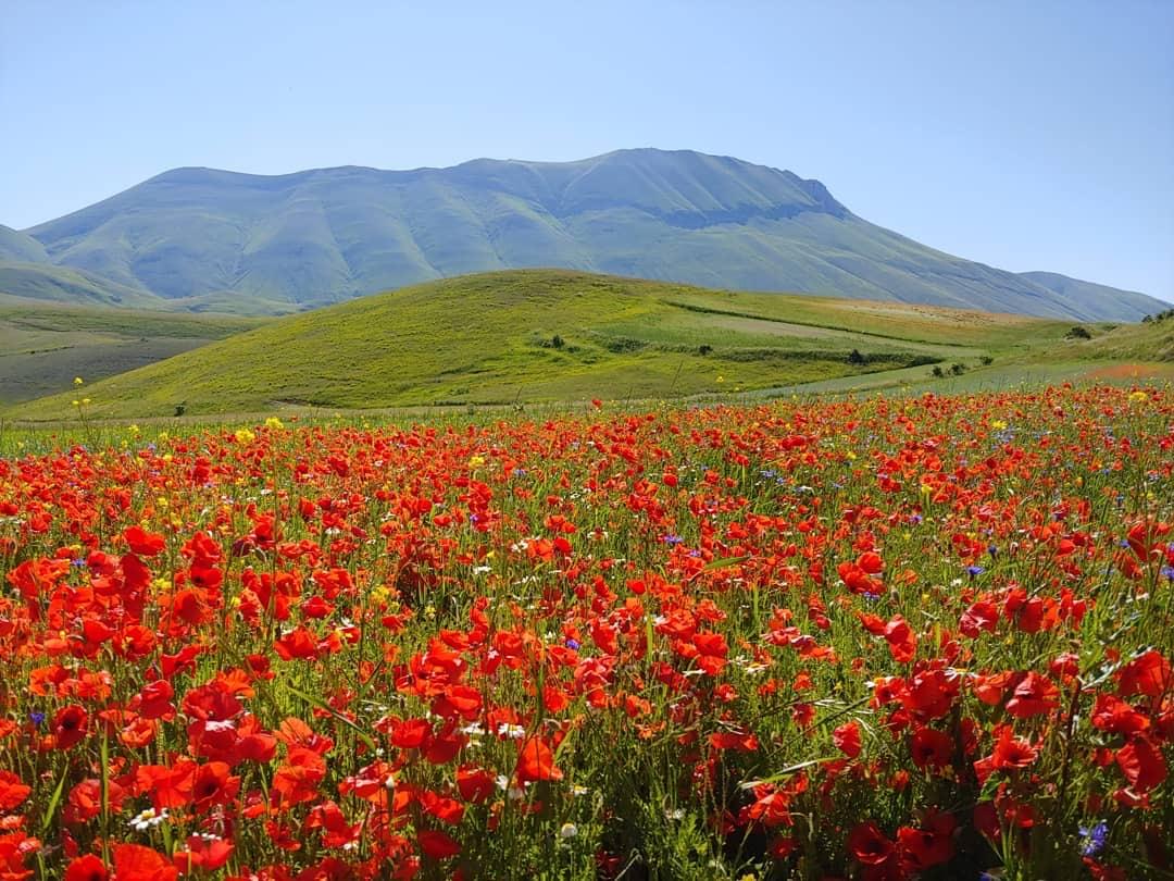 Cover I campi fioriti di Castelluccio di Norcia