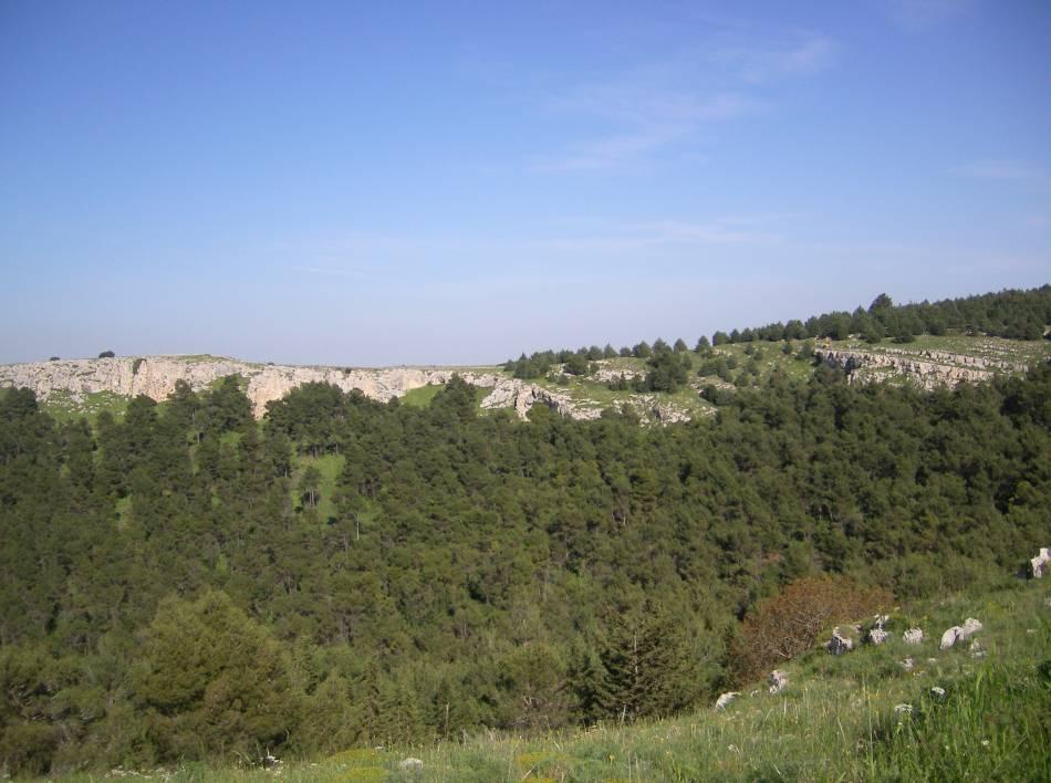 Cover Il pulicchio di Gravina nel Parco dell'Alta Murgia