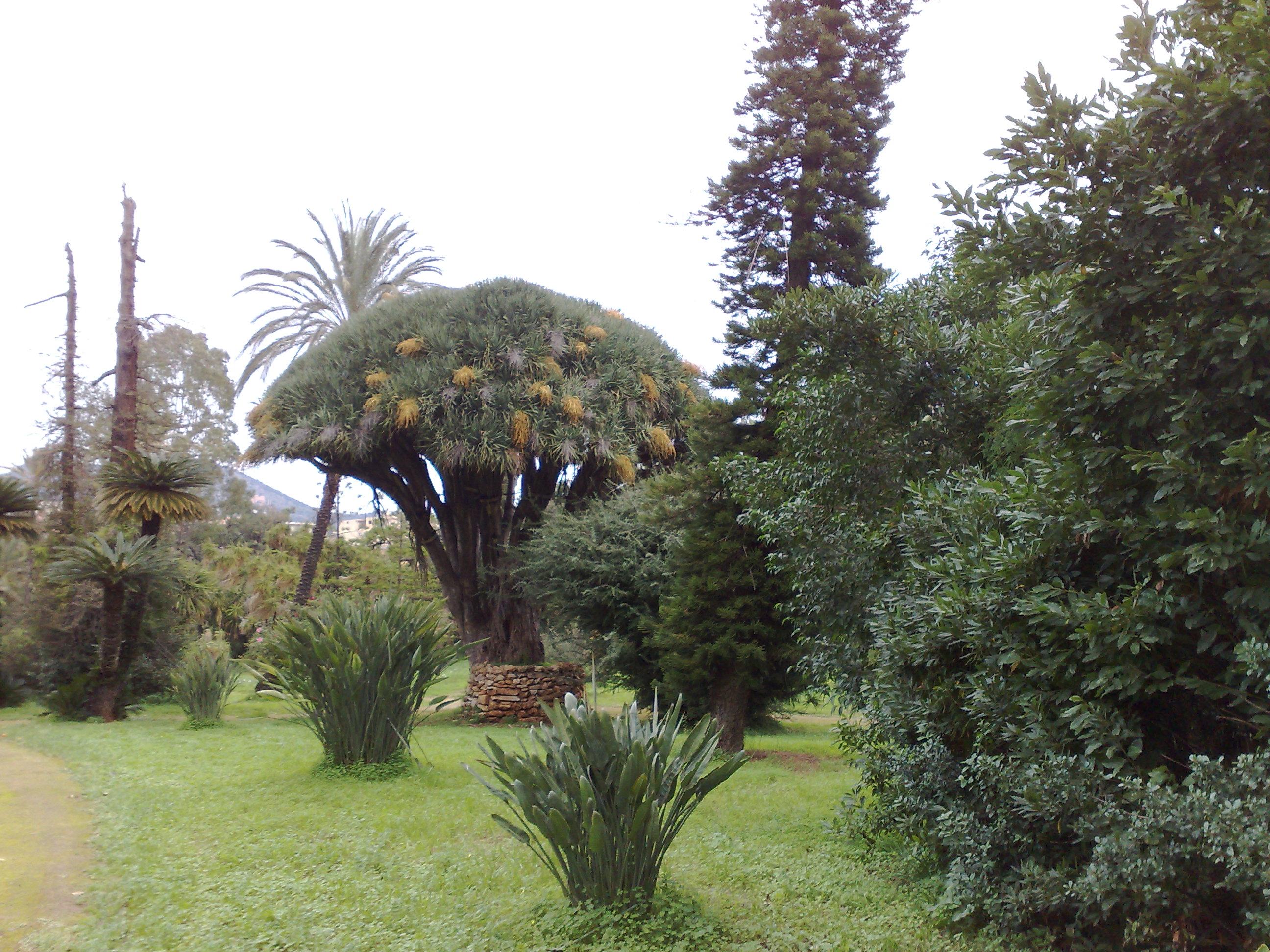 villa-malfitano9