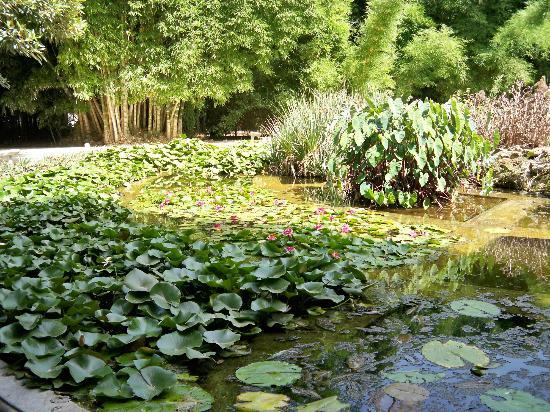 giardino-orto-botanico-2-