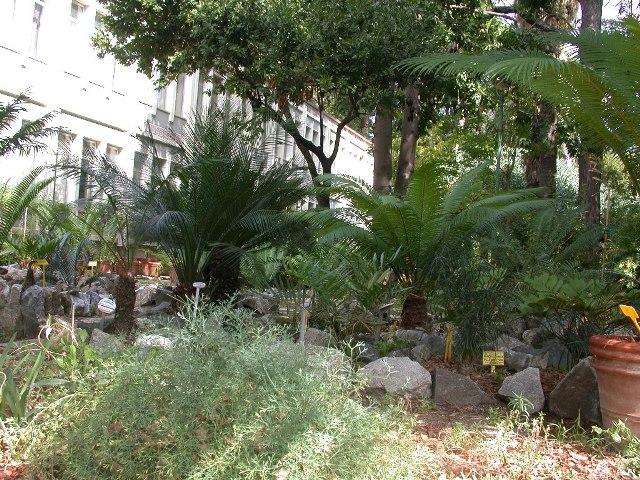 cycadaceae-orto-27set09