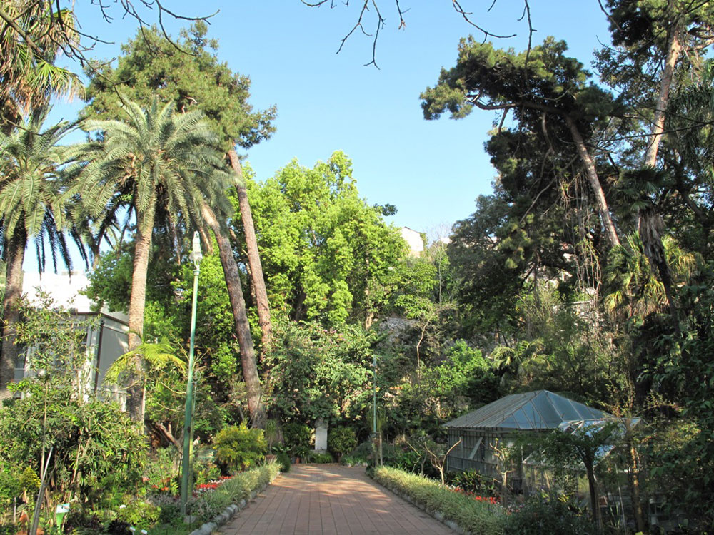 Cover Orto Botanico Pietro Castelli di Messina