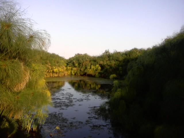 Cover Riserva Naturale delle Sorgenti del fiume Ciane e Saine di Siracusa