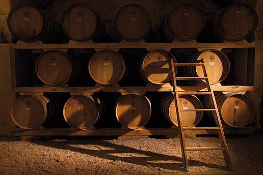 Cover Azienda vinicola Castel di Salve